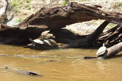 Wondermooie schildpadden