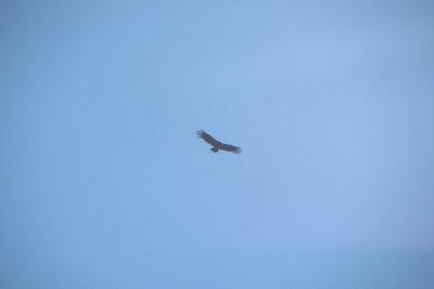 Nog een Condor