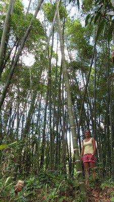 Bamboo in Vilcabamba