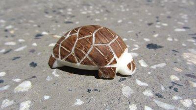 De tagua-noot is geen noot meer