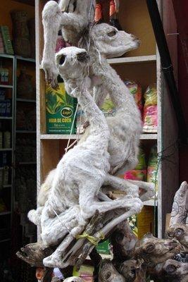 Lama-foetus, voor goed geluk onder de ingang van je huis begraven. :-) Zotte bolivianen!