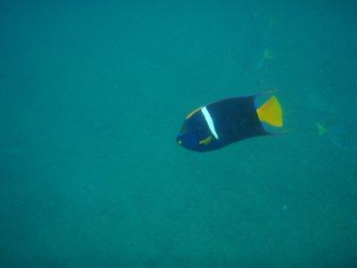 Vissen aan het Isla de la Plata