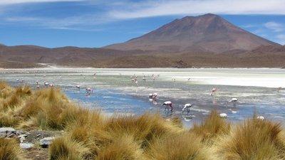 Laguna flamingo's