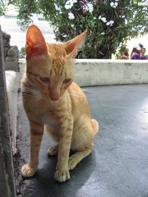 these skinny little kitties are all over town. also dogs, which lie around on the streets looking half dead. so sad<img class='img' src='http://www.travellerspoint.com/Emoticons/icon_sad.gif' width='15' height='15' alt=':(' title='' />