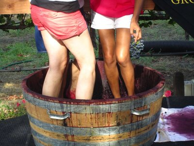 grape stomping at grgich winery