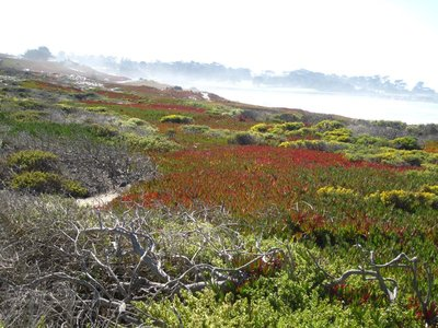 pretty colors along 17 mile drive