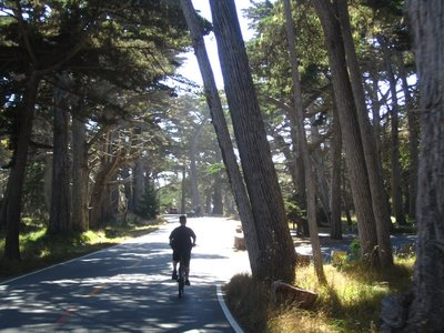 biking through forests along 17 mile drive