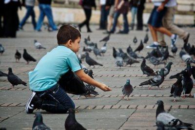 Pigeons Pigeons Pigeons!!!