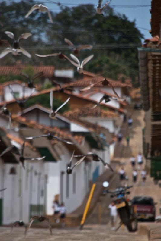 Birds of Barichara