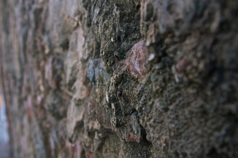 Coral wall in detail