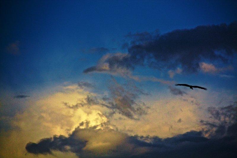 Kashmiri Eagle