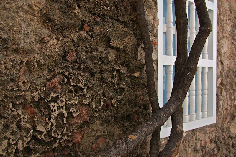 More Coral walls