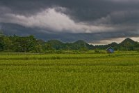 Cottage In Bohol Rice Fields