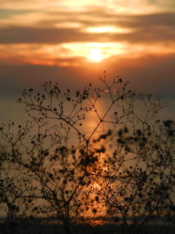 Curonian spit sunset at Nida