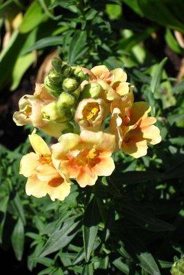 Thanksgiving Point Gaden flower 12