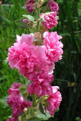 Flowers in the Tracy Aviary, Salt Lake City, UT