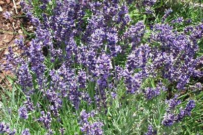Red Butte's Garden, Salt Lake City, Utah, USA 06