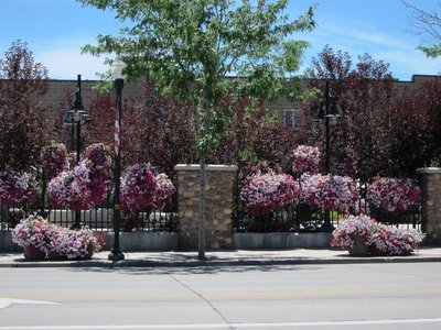 Flowers on the streets of Vernal