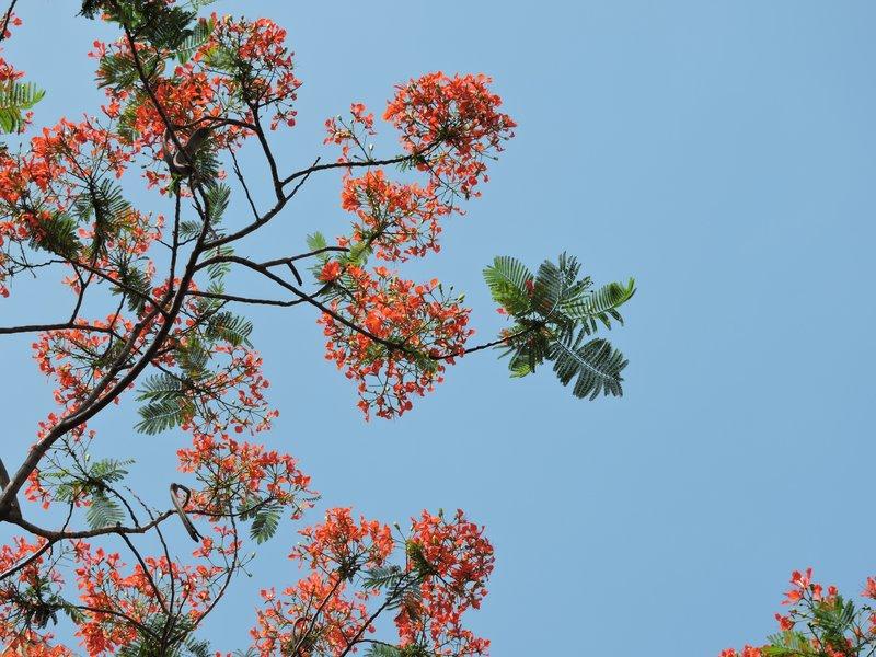 Hanoi sky in May