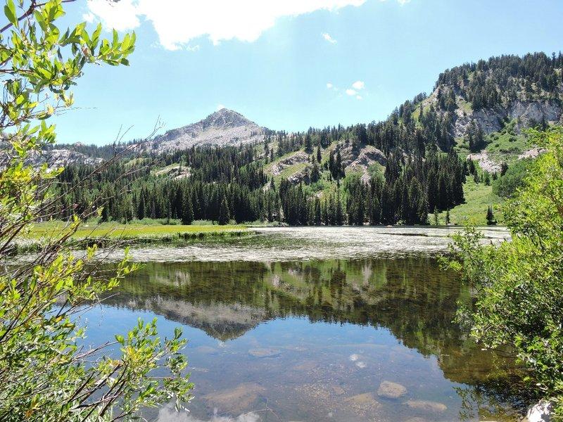 Silver Lake in July