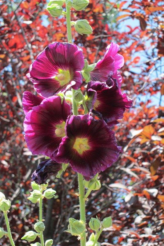 Thanksgiving Point Garden flower 01