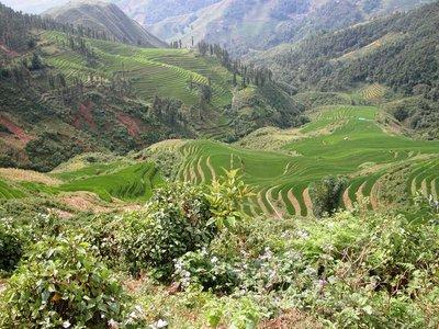 Terrace paddy field - Sapa
