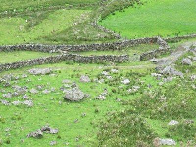 Sheep Folds