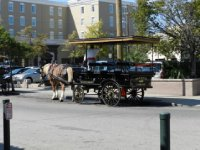 Buggy tours of Charleston