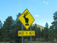 Watch out for wildlife!