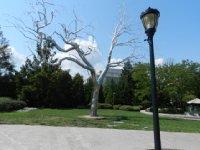 Silver tree??