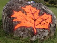 That's one big maple leaf stuck to rock!