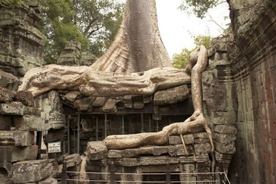 Have you noticed the theme of trees at Ta Prohm?