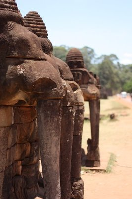"The aptly named ""Elephant Terrace"""