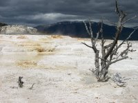Mammoth Springs
