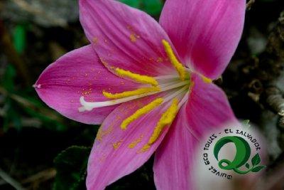 Flor Cerro Verde