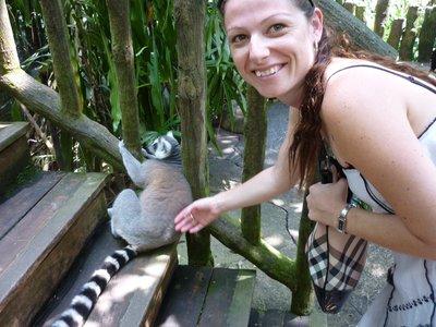 Touching a lemur