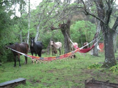 Horses_on_the_ranch.jpg