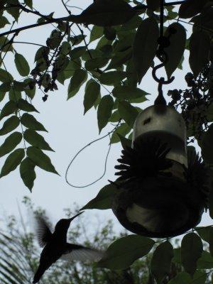 Hummingbird__3_.jpg