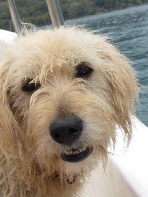 Pepper_the_dog.jpg