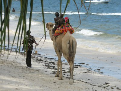 riding a camel by the sea