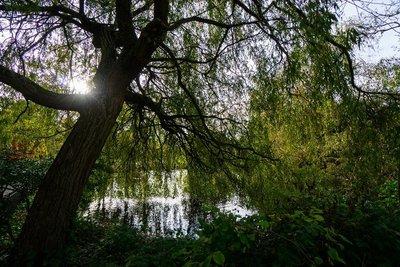 Waterlow06.jpg