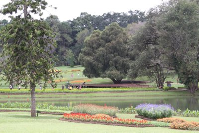 The botanic garden of Kandawgyi