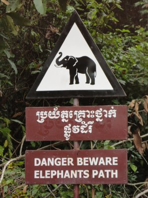 Taking pictures of elephants I should have taken heed of the sign, forgetting how close they were