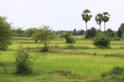 Rice field panoramas from the train
