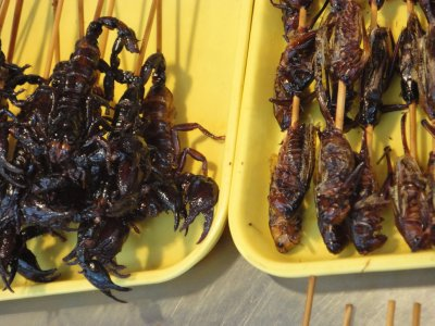 Scorpions and grasshopper. Delicious!