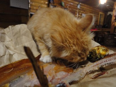 The cat likes our smoked fish. Pity it was mostly bones!