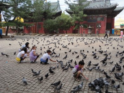 Fattened pidgeons at the Monastery