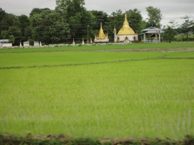 Golden stupas dotted the rice field landscape