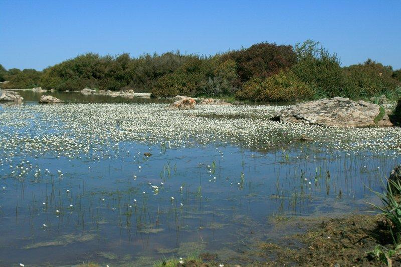 Pauli, little lakes of Giara di Gesturi