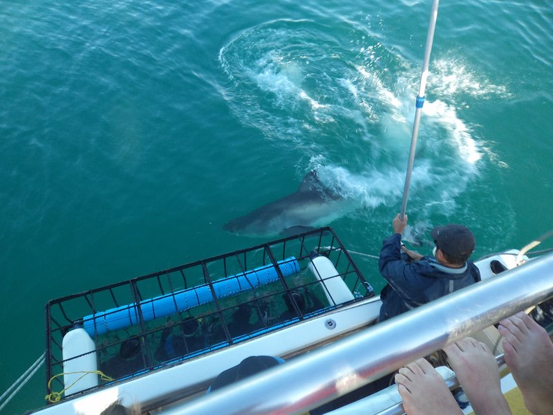 The Great White Sharks got incredibly close to us!